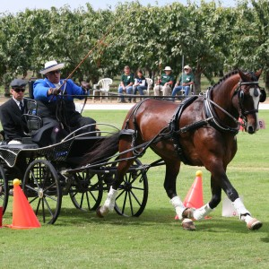 Diane Kastama United States Para-Equestrian Driving for the Disabled