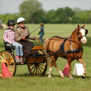 Karen Gorham United States Para-Equestrian Driving