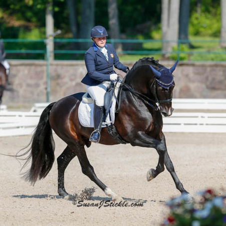 Susan Treabess on Fugitivo XII Qualified Pure Spanish FEI Dressage Stallion